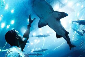 Barcelona Aquarium Tickets